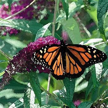 Butterfly Bush by Cole Black