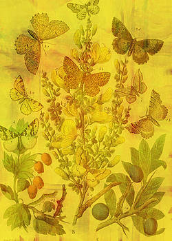 Butterfly Cascade by Sarah Vernon