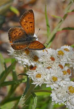 Mae Wertz - Butterfly