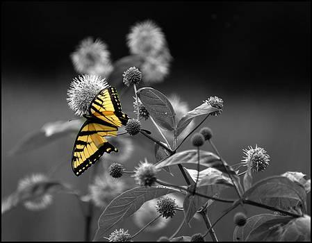 Butterfly Color my World by Jeffrey Platt