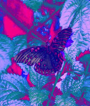 Butterfly  by David Mckinney
