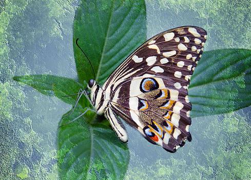 Barbara Manis - Butterfly Dreams
