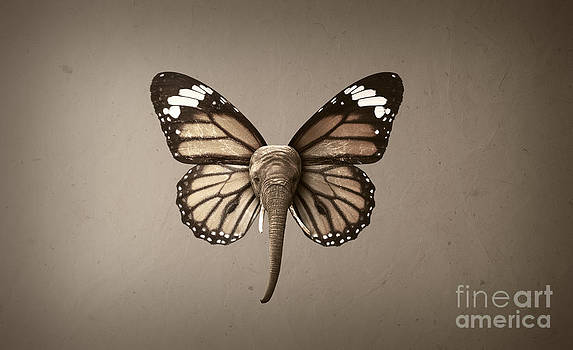 Butterfly Elephant by Kitty Bitty