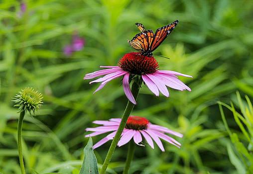 Butterfly flower by Danielle Allard