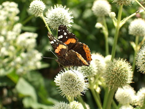Butterfly Fuz by Katerina Naumenko