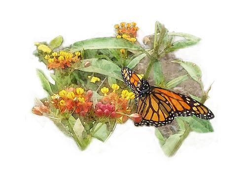 Butterfly Garden  by Megan Nicole McKinney
