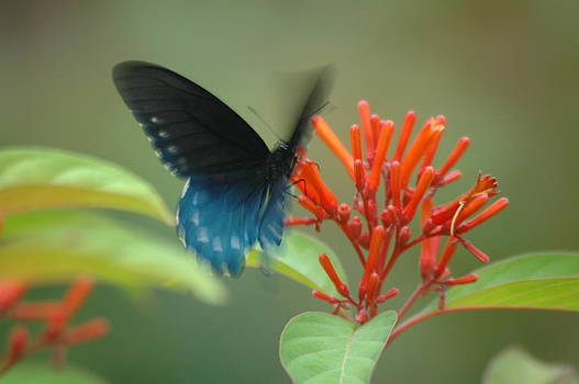 Butterfly Garden by Sheri Heckenlaible