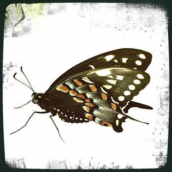 Dorian Hill - Butterfly Grunge
