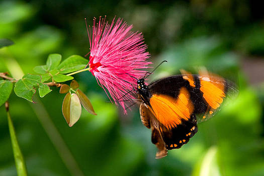 Butterfly Hanging on by James O Thompson