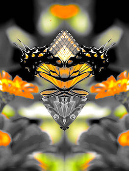 Butterfly Illusion by Brad Fuller