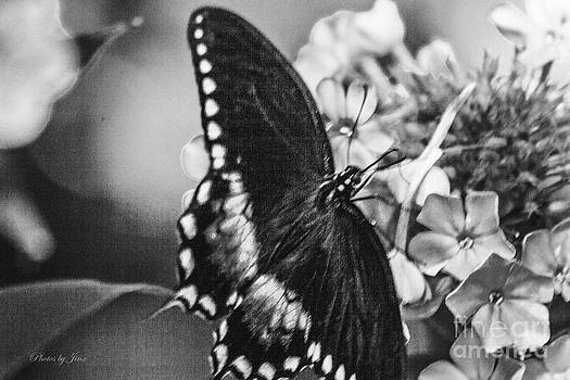 Butterfly in BW by Jinx Farmer