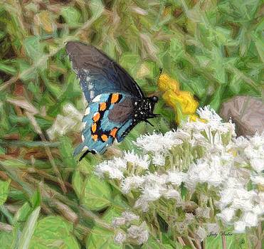Butterfly in Color Pencil by Judy  Waller