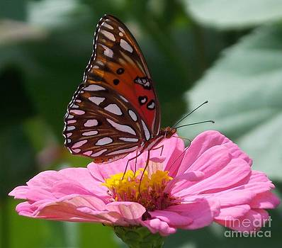 Butterfly in the Garden by Annette Allman