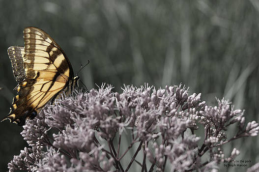Butterfly in the Park by Steph Maxson