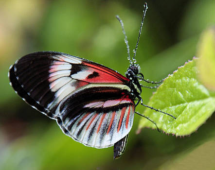 Butterfly in the rain by Linda Russell