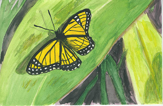 Donna Walsh - Butterfly in Vermont Corn Field