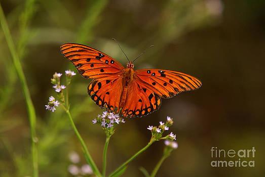 Butterfly by J Cheyenne Howell