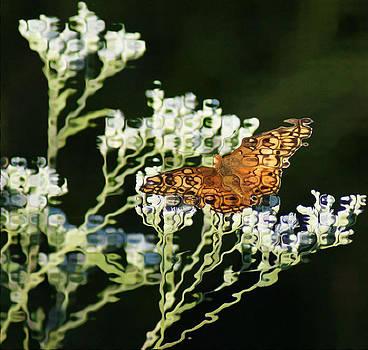 Joe Bledsoe - Butterfly