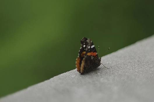 Butterfly by John Conrad Johnson III