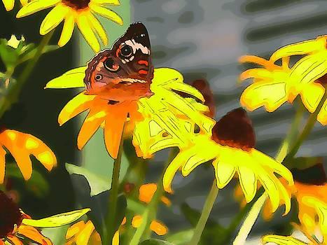 Butterfly by John Kozlick