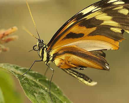 Butterfly   by Julie Underwood