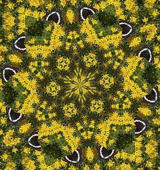 Valerie Kirkwood - Butterfly Kaleidoscope