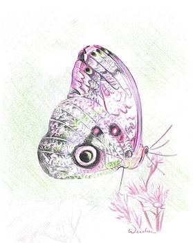 Butterfly by Kathy Weidner