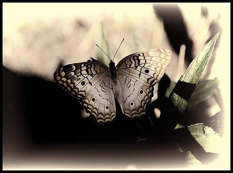 Butterfly Kisses by Oscar Alvarez Jr
