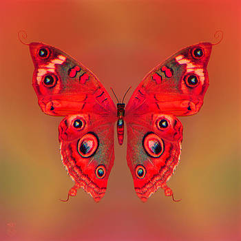Butterfly by Li   van Saathoff