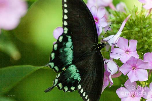 Butterfly Love by Jinx Farmer