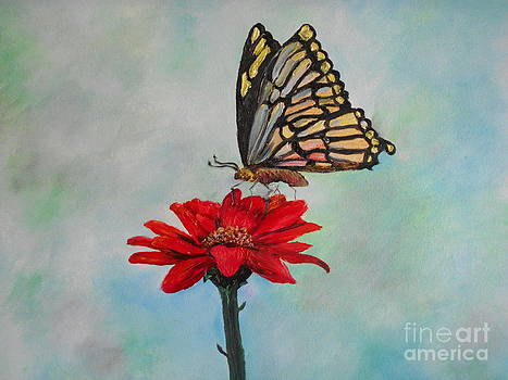 Butterfly Love by Rhonda Lee