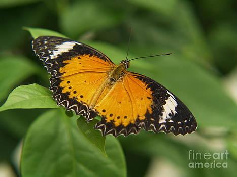 Butterfly by Melissa McDole