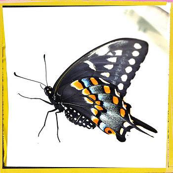 Dorian Hill - Butterfly Mellow Yellow