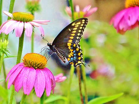 Butterfly by Nelin Reisman