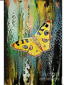 Butterfly by Nelu Gradeanu