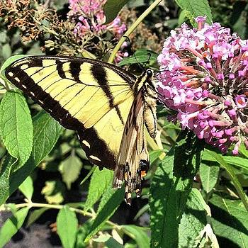 #butterfly #nofilter #iphoneonly by Megan Rudman