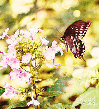 Butterfly of Happiness by Jinx Farmer
