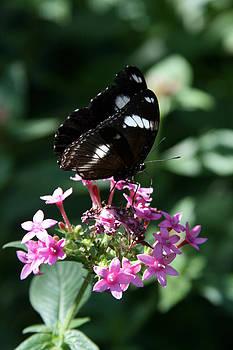 Butterfly on a Flower by Laurie Poetschke