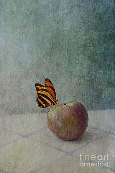 Susan Gary - Butterfly on Apple