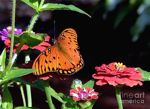 Butterfly on Early Autumn Day by Eva Thomas