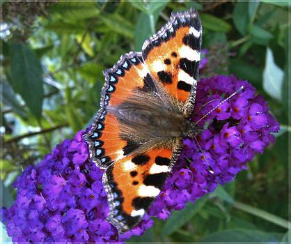 Butterfly on Flower by Beril Sirmacek