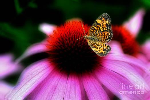 Dan Friend - Butterfly on flower