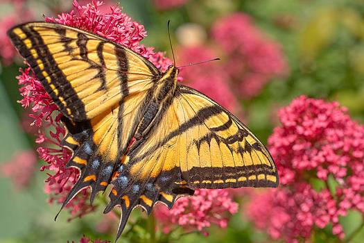 Utah Images - Butterfly on Flower