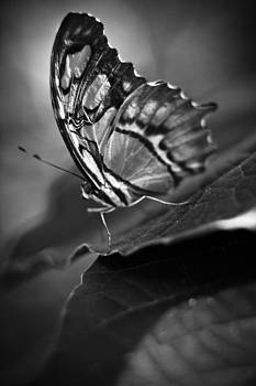 Butterfly On Leaf Black And White by Bradley R Youngberg