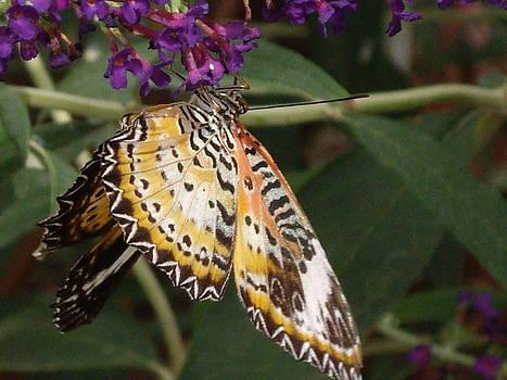 Butterfly on Purple Flower by Barbara Lightner