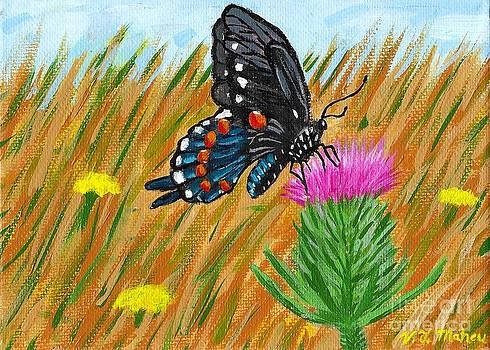 Vicki Maheu - Butterfly on Thistle