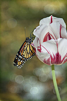 Butterfly on Tulip by Heather Reeder
