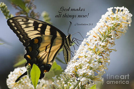 Jill Lang - Butterfly on White Bush with Scripture