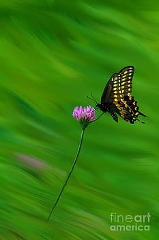 Dan Friend - Butterfly on wild flower