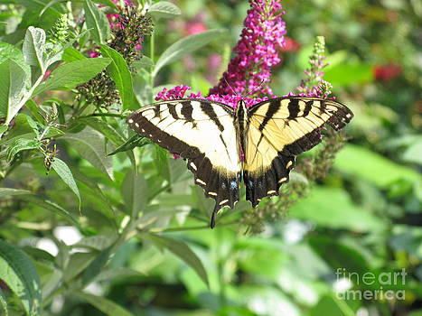 Butterfly Paradise by Ausra Huntington nee Paulauskaite